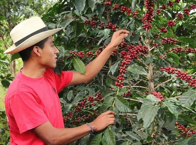 Kávétermelő országok, vidékek - GUATEMALA - MINTA